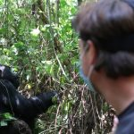 How much does it cost : Silverback gorilla & Nyiragongo trekking